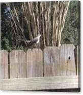 Sitting On A Fence  Canvas Print