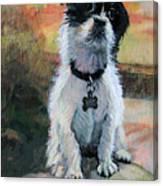 Sitting Pretty - Black And White Puppy Canvas Print