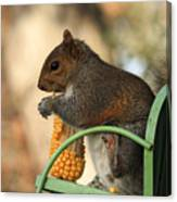 Sitting Squirrel Canvas Print