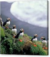 Six Puffins Perched On A Rock Canvas Print