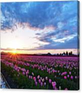 Skagit Floral Sunset Canvas Print