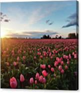 Skagit Sunset Field Canvas Print