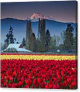 Skagit Valley Tulips-mt. Baker Canvas Print
