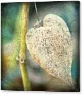 Skeleton Physalis Canvas Print