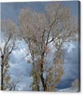 Skeleton Trees Canvas Print