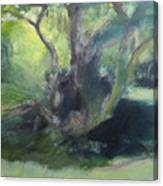 Sketch Of A Shady Glade. Canvas Print