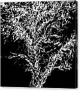 Sketchbook Tree 2-b-w Canvas Print