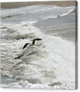 Skimmer And Waves Canvas Print
