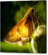 Skipper Butterfly Basking In Sun Canvas Print
