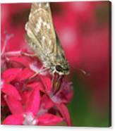 Skipper Butterfly Canvas Print