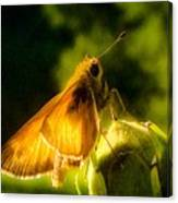 Skipper Butterfly With Sun Shine Canvas Print