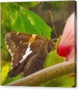 Skipper Trying To Hide Behind A Flower Canvas Print