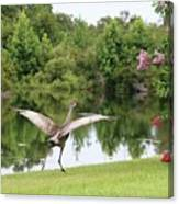Skipping Sandhill Crane By Pond Canvas Print