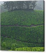 Skn 6550 From Tea's Perspective. Color Canvas Print
