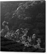 Skn 6707 Tree Parade. B/w Canvas Print