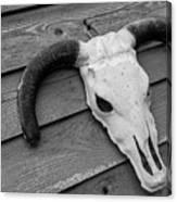 Skull In North Dakota  Canvas Print