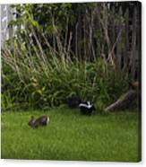Skunk And Rabbit Surprise Canvas Print