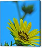 Sky Flower Canvas Print