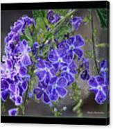 Sky Flower Window  Canvas Print