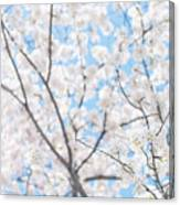 Sky Full Of Blossoms Canvas Print