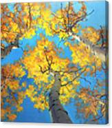 Sky High Aspen Trees Canvas Print