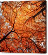 Sky Roots In Forest Red Canvas Print