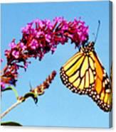 Skylands Monarch Canvas Print