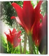 Skyward Red Lilies Canvas Print