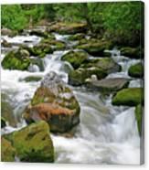 Slate Creek, Nez Perce National Forest, Idaho Canvas Print