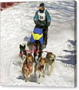 Sled Dogs In Action Canvas Print
