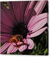 Sleek Bee Canvas Print