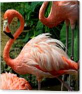 Sleeping Flamingo Canvas Print