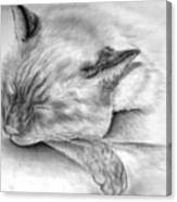 Sleeping Siamese Canvas Print