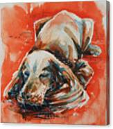 Sleeping Spaniel On The Red Carpet Canvas Print