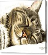 Sleeping Tabby Cat  Canvas Print