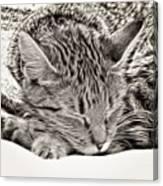 Sleeping Tabby Canvas Print