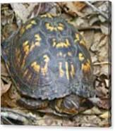 Sleeping Turtle Canvas Print