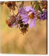 Sleepy Bee On New England Aster Vertical Canvas Print