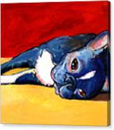 Sleepy Boston Terrier Dog  Canvas Print