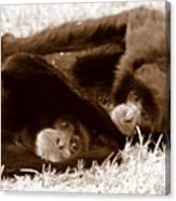 Sleepy Monkeys Canvas Print