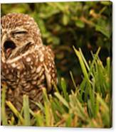 Sleepy Owl Canvas Print