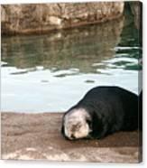 Sleepy Sea Otter Canvas Print