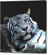 Sleepy Tigress Canvas Print