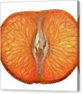 Slice Of A Mandarin Orange Canvas Print