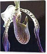 Slipper Orchid Canvas Print