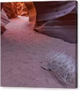 Slot Canyon Tumbleweed Canvas Print
