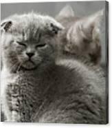 Slumbering Cat Canvas Print