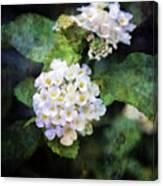 Small Blossoms 4948 Idp_2 Canvas Print
