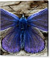 Small Blue Butterfly On A Piece Of Wood In Ireland Canvas Print