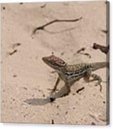 Small Brown Lizard Sitting On A White Sand Beach Canvas Print